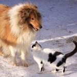 Partir au ski avec son animal de compagnie