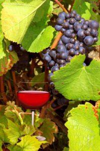 Le beaujolais est un vignoble situé au nord de Lyon.