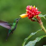 Costa Rica : 5 expériences à vivre pendant son voyage